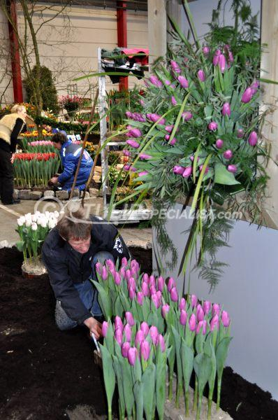 13-holland_food_and_flowers-flora-exhibition-tulips-tulpen (16).JPG