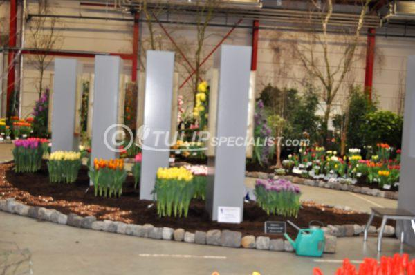 23-holland_food_and_flowers-flora-exhibition-tulips-tulpen (25).JPG